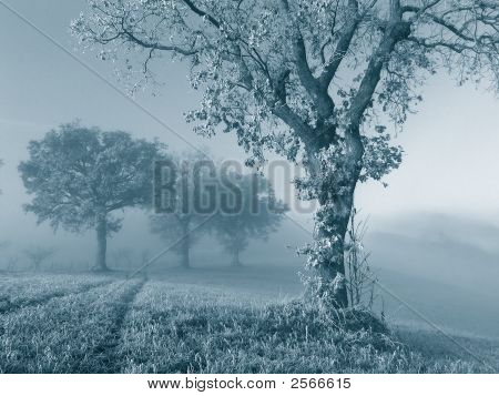 Frozen Oak Tree