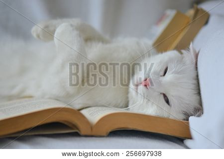 white cat with blue eyes snooze on the book