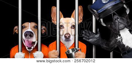 Couple Of  Criminal Dogs Behind Bars In Police Station, Jail Prison, Or Shelter  For Bad Behavior, P