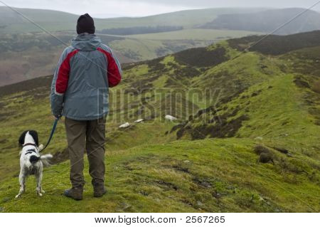 Man and English Springer Spaniel walking in the hills looking down on a flock of sheep on a cold misty day poster