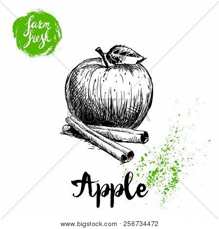 Hand Drawn Sketch Apple With Leaf And Cinnamon Sticks Poster. Vitamin And Healthy Farm Fresh Fruit V