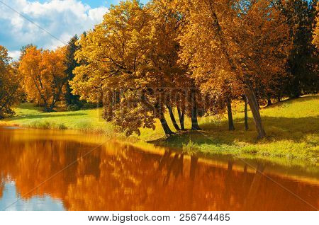 Autumn forest sunny landscape. Yellow autumn trees near the forest river in nice autumn weather. Forest autumn landscape scene. Golden autumn trees near the river