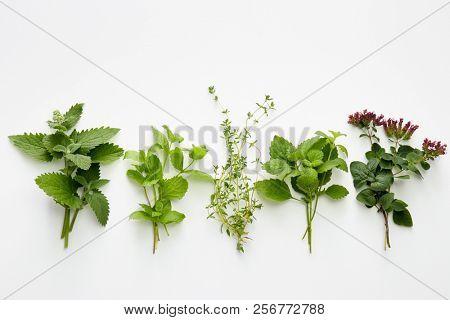 Assortment of fresh herbs (catnip, mint, thym, lemon balm and oregano) on white background.