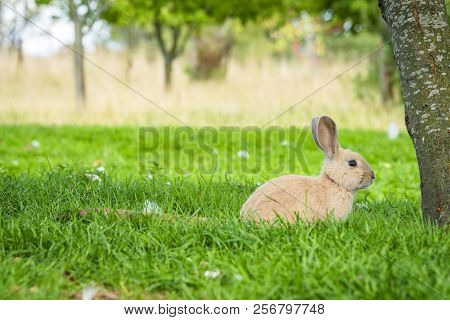 Rabbit Under A Tree In A Garden At Easter In Idyllic Surroundings In Green Nature