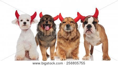 adorable group of dogs wearing devil's costume for halloween while standing and sitting on white background, panting