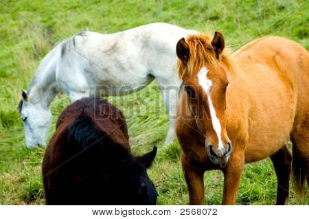 beautiful horses in a meadow please check my portfolio for more! poster