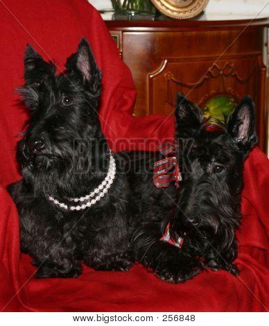 2 Black Scotty Dogs 2