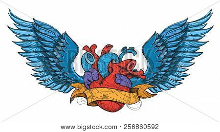 Anatomical Heart Vector Photo Free Trial Bigstock