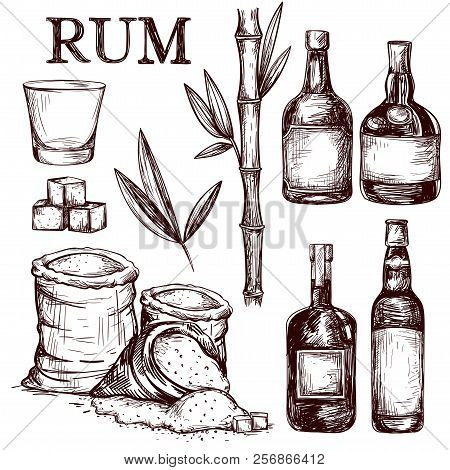 Composition Of Alcoholic Beverage Rum. Hand Drawn Cane Leaves, Sugar Plant Stalks, Sugarcane Farm Ha