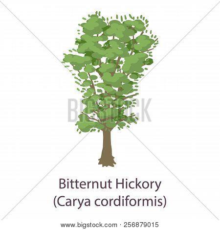 Bitternut Hickory Icon. Flat Illustration Of Bitternut Hickory Icon For Web