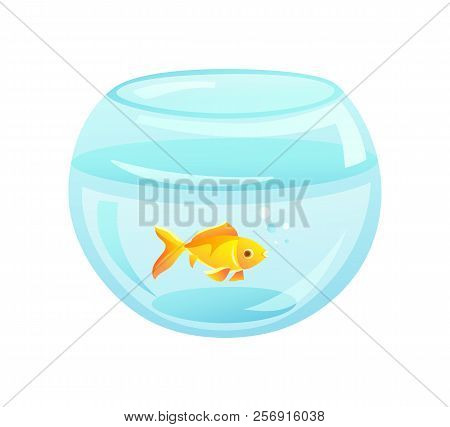 Golden Fish In Aquarium Of Rounded Shape, Golden Fish Domestic Pet In Fishbowl, Bowl And Bubbles Vec