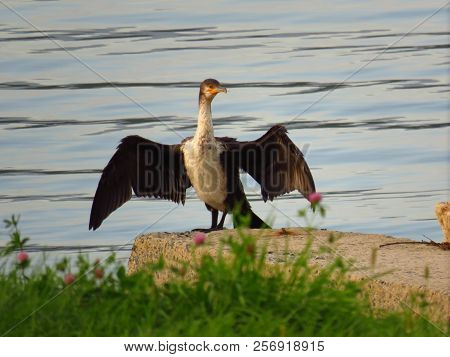 Cormorant Drying Wings On The Concrete Pier On Sea Background
