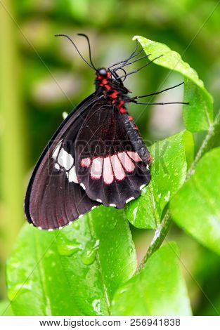 Black Butterfly Perched On A Leaf In A Garden