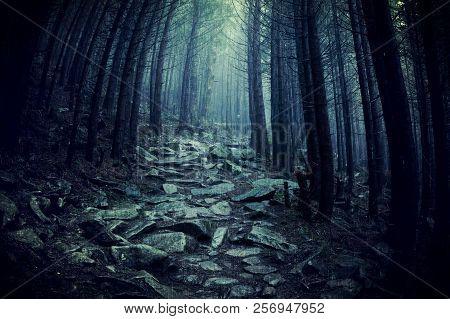 Path Through A Dark Forest. Dark Woodland At Rainy Weather