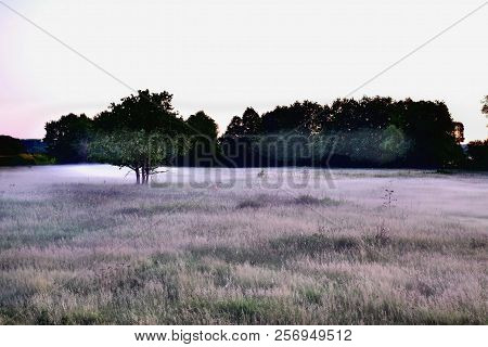 The Fog Is Spreading Over A Forest Glade. A Grey Fog Is Spreading Over The Clearing. In The Backgrou