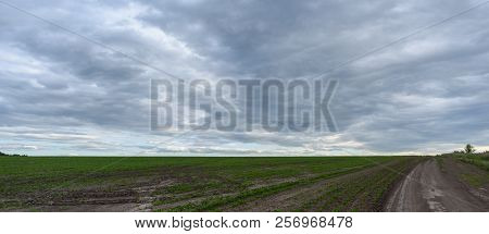 Panorama Rural Summer Landscape With A Road, Field And Forest. Summer Day, Blue Sky With White Cloud