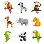 Different bright jungle and safari animals poster