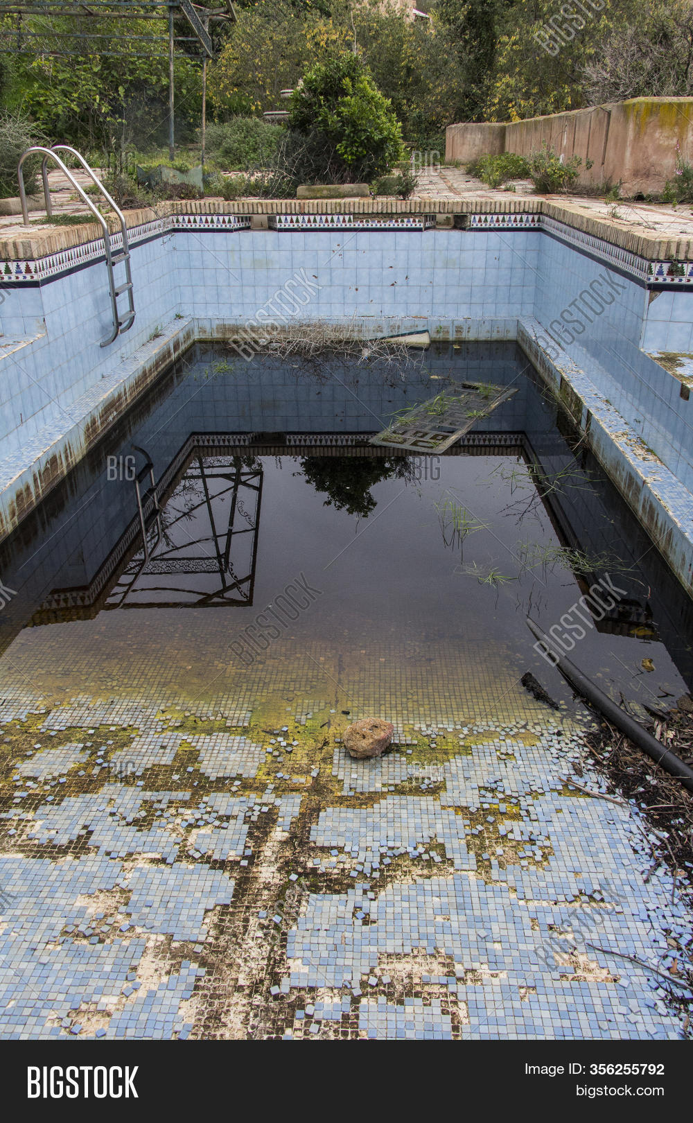 Dirty Abandoned Pool Image Photo Free Trial Bigstock