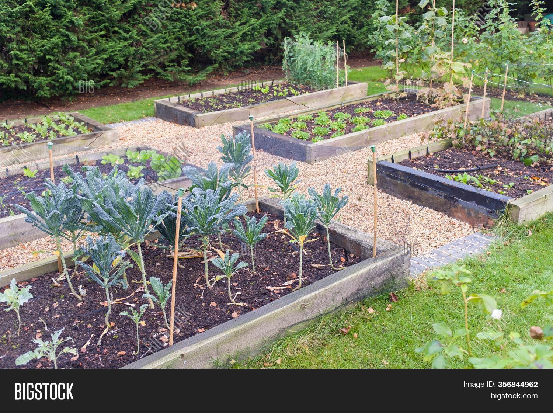 Vegetable Garden Image Photo Free Trial Bigstock