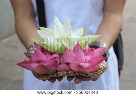 Lotus Flower In Tourist's Hand At Sri Dalada Maligawa Or The Temple Of The Sacred Tooth Relic Is A B