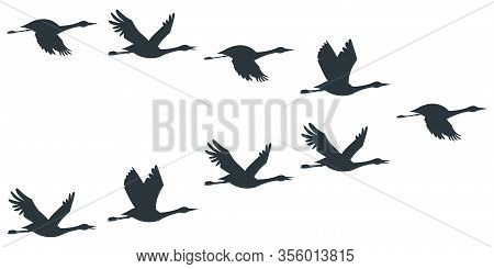 Flock Of Cranes Or Stork Black Silhouette In Flying. Vector Flat Illustration Of Bird Migration Isol