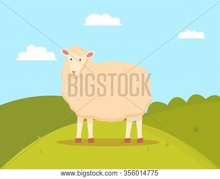 Young Sheep Domesticated Ruminant Animal, Mutton On Green Field. Farming Vector, Lamb With Wool Flat