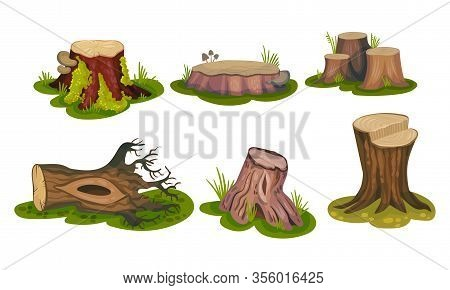 Freshly-cut Stubs And Moss-covered Stumps Standing On Green Patch Vector Set