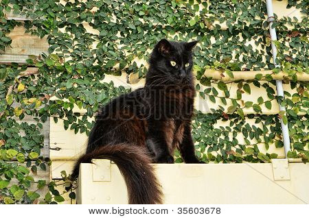 Black Cat on a Ledge