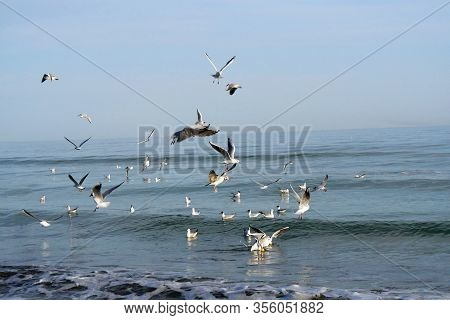 Seagulls. Group Of Seagulls Flying In The Sea.