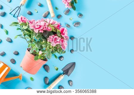 Home Gardening Flatlay, Greenhouse Concept. Indoor Flower Garden, Small Plant Pots With Gardening To
