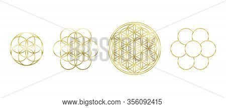 Golden Flower Of Life, Seed And Egg Of Life. Geometric Figures, Spiritual Symbols And Sacred Geometr