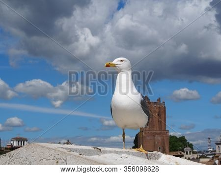 Seagull Sits On A Battlement. Sunny Day In Rome