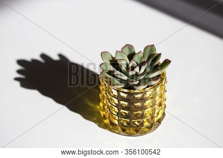 Green Succulent In Yellow Glass Pot On White Background With Dark Shadows And Copy Space. Creative S