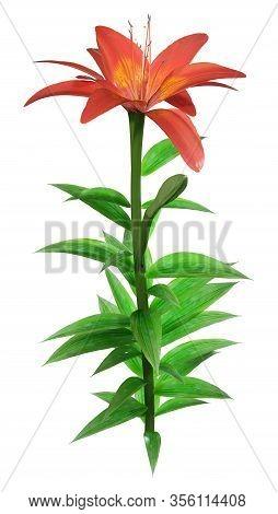 3D Rendering Orange Sensation Asiatic Lily On White