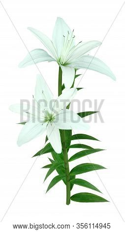 3D Rendering Bright Diamond Asiatic Lily On White