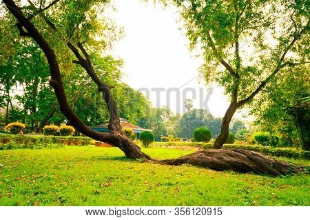 Soil Creep Fallen Tree With Curved Shape In Tree Trunk Lying On Ground In Crooked Forest Woodland En