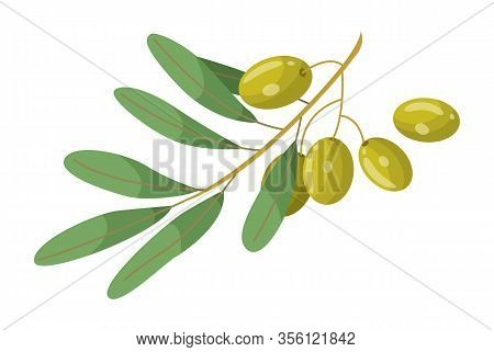 Olive Branch With Leaves Element Of Treatment Hair. Glossy Green Plant Raw Vegan Product Isolated On