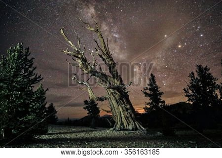 Camping Under the Stars and Milky Way in Bristlecone Pines