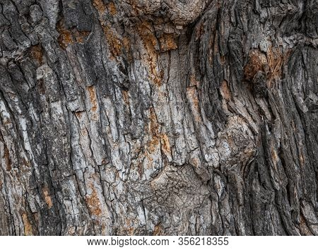 Old Tree Bark Surface Texture Background, Wrinkled Tree Surface
