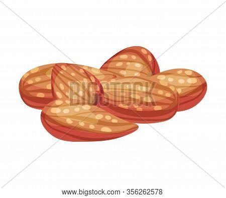 Whole Almond Kernel Without Nutshell Vector Illustration. Organic Food Ingredient