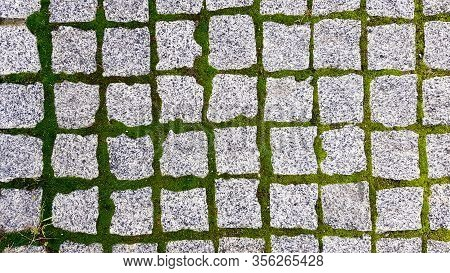 The Texture Of The Paved Tile Of The Street. Concrete Paving Slabs. Paving Slabs. Grass Between The