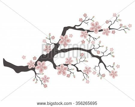 Sakura Cherry Blossoms. Pink Cherry Flower Blossom Branch, Peach Bloom, Sakura Branch. Blooming Asia