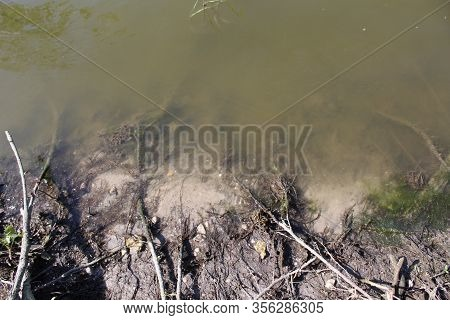 Muddy Water In The River And Muddy Bottom With Plant Roots