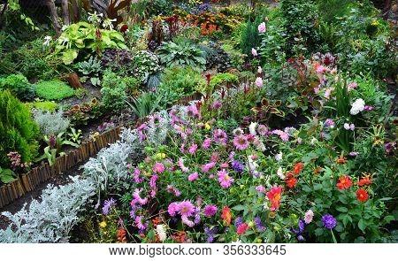 Flowers In Autumn Garden Background. Multicolored Autumn Flowerbed Top View.