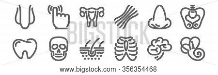 Set Of 12 Anatomy Icons. Outline Thin Line Icons Such As Vestibular System, Thorax, Skull, Nose, Ute