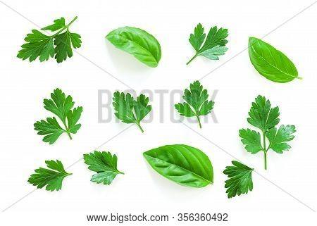 Parsley, Basil Herb Set. Parsley Leaf Isolated On White Background. Parsley On White.