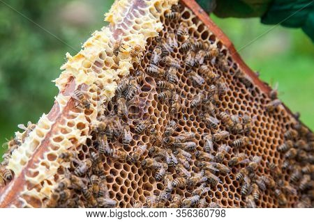 Working Bees On Honeycomb.