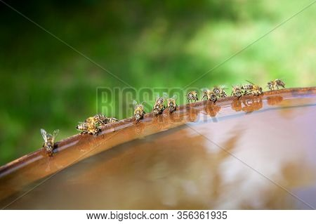 Bees Drinking Water In Hot Summer Day..