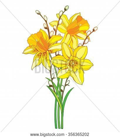 Vector Bouquet With Outline Yellow Narcissus Or Daffodil Flower And Willow Branch Isolated On White