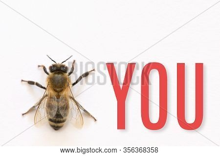 Bee You A Figure Of Speech Or Metaphor